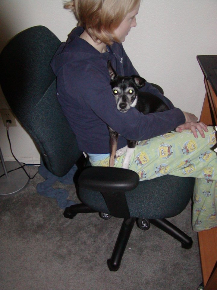 January 2007, dog holding time