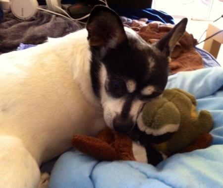 asha bird and chipmunk sleeping