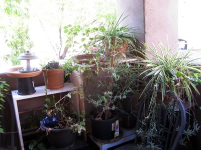 balcony plants bird feeders