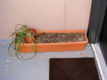 door planter before